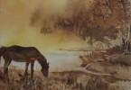 Cheval en pâture - aquarelle 30 x 25 cm