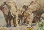 Éléphants - aquarelle 40 x 30 cm