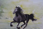 Frison, mon cheval - aquarelle 50 x 40 - collection privée