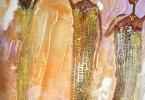 Marché coloré - huile sur toile 25 x 30 cm