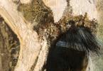 Oeil de zèbre - huile sur toile 17 x 30 cm
