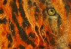 Léopard à l'affût - huile sur toile 50 x 40 cm